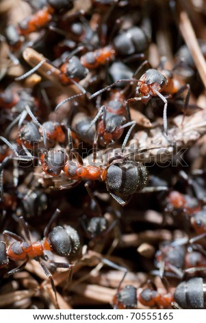 A group of ants, working at their anthill. - stock photo