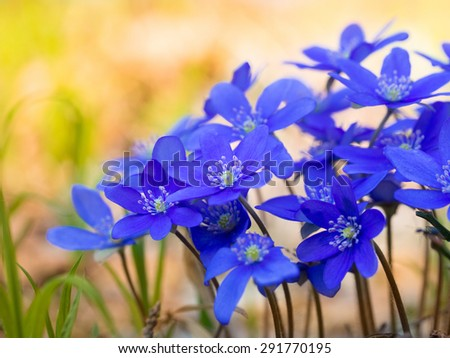 A group of beautiful blue flowers - stock photo