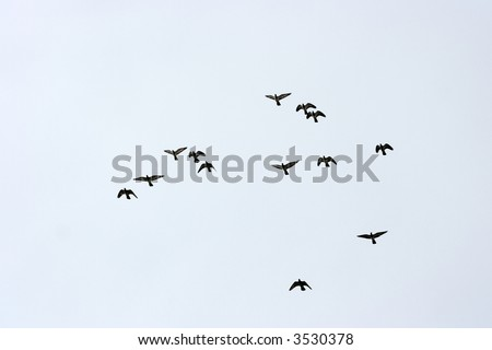 A group of birds flying in the sky - stock photo