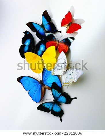A group of butterflies on white background - stock photo
