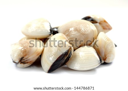 a group of clam on white - stock photo