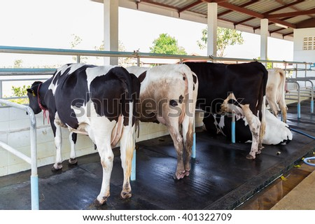 A group of cows feeding in a stable - stock photo
