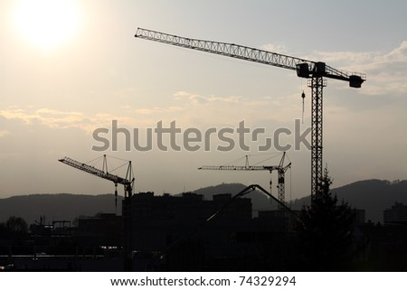 A group of cranes lit by the evening sun from behind