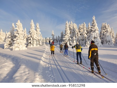 A group of cross country skiers on a  sunny winter morning