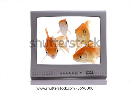 A group of curious goldfish on a television screen stare out at the viewer. - stock photo