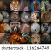 A group of different wild animal faces in a square background. The creatures range from a tiger, elephant, giraffe, buffalo to birds, lizards and polar bears. Use it for a conservation or zoo concept. - stock photo