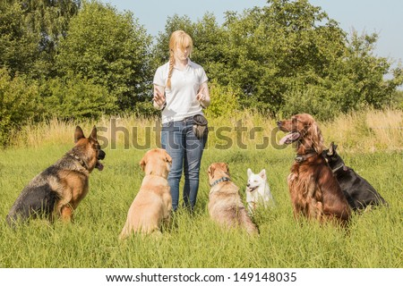 A group of dogs listen to the commands of the dog trainer - stock photo