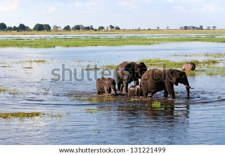 a group of elephant in their natural habitat - stock photo