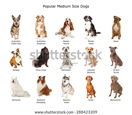 A group of fifteen different medium size family breed dogs  - stock photo