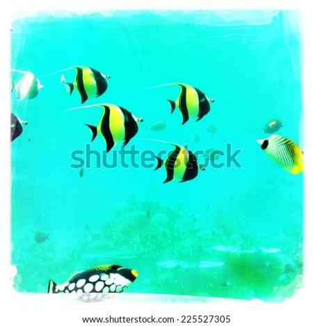 A group of fish swimming in bright teal water. - stock photo