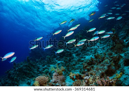 A group of fishes in Red Sea - stock photo