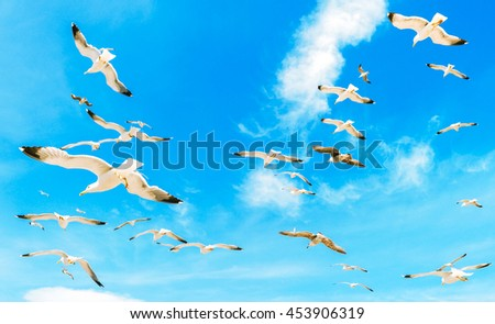 A group of flying seagull birds. Seagulls in the sea. White seagulls flying in the clean blue sky with wings spreaded.