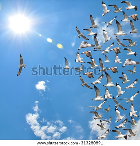 a group of flying seagull birds with one individual bird going in the opposite direction with blue sky background. - stock photo