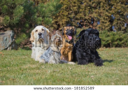 A group of four dogs of different breeds is lying on a green lawn. - stock photo