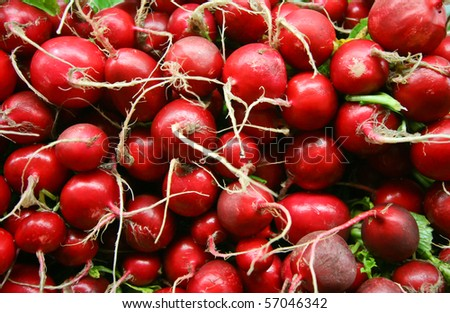 A Group of freshly radishes at food market - stock photo