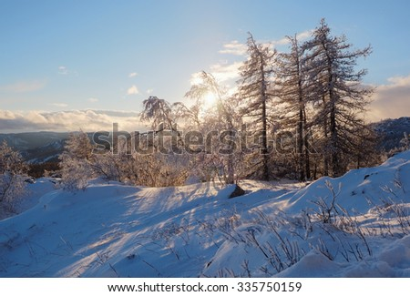 A group of frosted trees on top of the Sunduk mountain in sunlight in clear winter evening, South urals, Russia. - stock photo