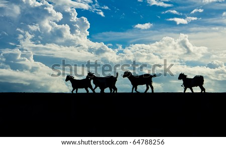 a group of goats in Silhouette