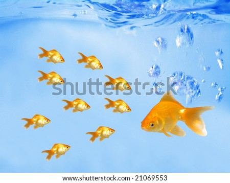 A group of goldfishes following their leader (under water) - stock photo