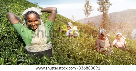 A Group Of Happy Tea Pickers Harvesting Concept - stock photo