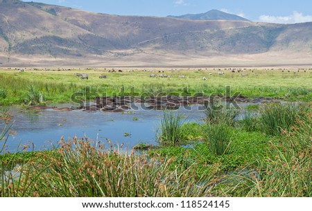 A Group of Hippos soak themselves in the watering hole as a herd of Zebras and Wildebeest graze nearby. Ngorongoro Crater, Tanzania - stock photo
