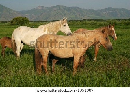 a group of horses - stock photo