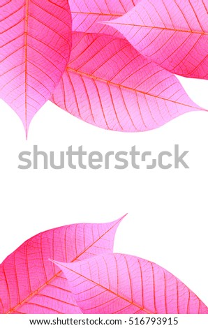 A group of leaf in soft sweet pink red tone, isolated on white background
