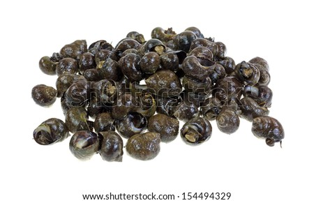A group of live periwinkles on a white background.