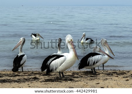 a group of Palicans along the beach near water in the bay.