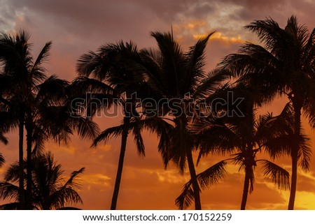 A group of palm trees against an orange and yellow sky at sunset in Hawaii