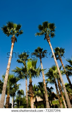 A group of palm trees with a deep blue sky as the background.