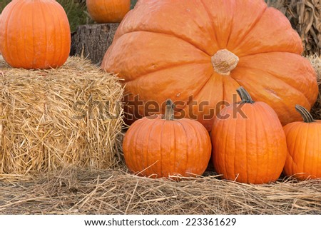 A group of pumpkins in a variety of sizes with a gigantic pumpkin in the center. A portion of a hay bale on the left and row of straw on the bottom provide space for text.