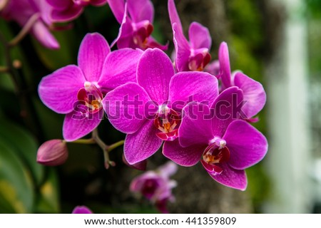 A group of purple orchids located at the 2016 New York Botanical Garden Orchid show.