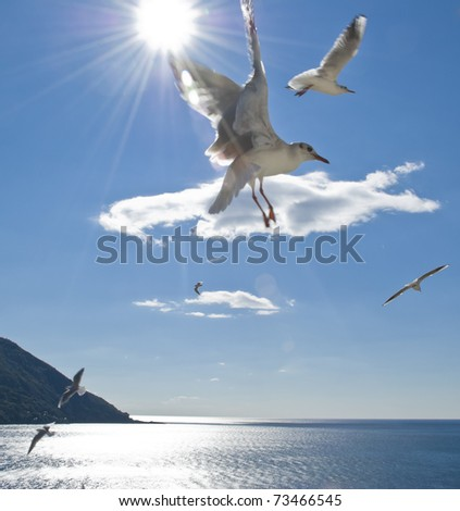 A group of seagull flying over the sea in a sunny day - stock photo