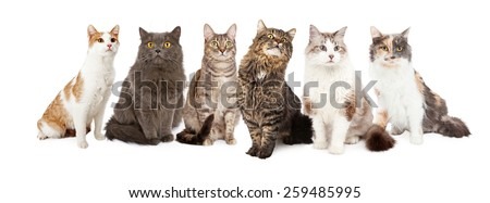 A group of six cats sitting together. Image sized to fit into a popular social media timeline cover image placeholder - stock photo