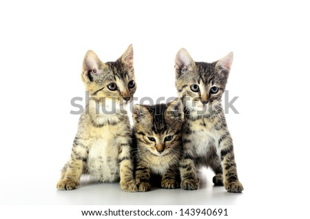 A group of small gray kittens isolated on white background