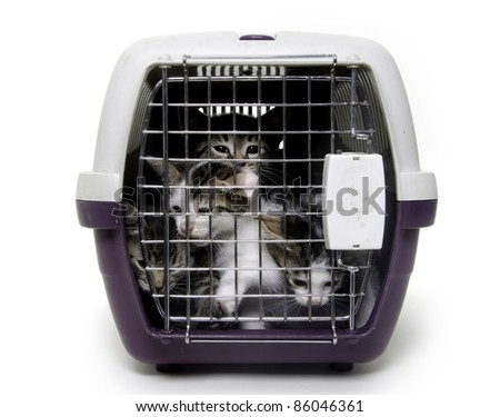 A group of small kittens inside of a pet carrier on white background