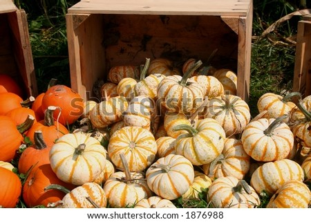 A group of small, striped white and orange gourds with a wooden crate in the background