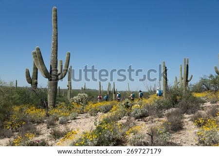 A group of tourists is on the blooming Sonoran Desert in Saguaro National Park, Arizona, USA - stock photo