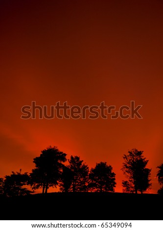 a group of tree in sunset background - stock photo