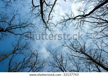 A group of trees high over the sky