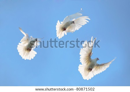 A group of white doves flying in the sky - stock photo