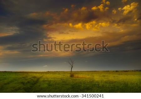 A guiet evening in the meadows.Young green grass and old dead tree lit by the last rays of sunset. - stock photo