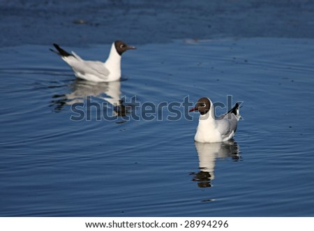 A gull floats in a lake.