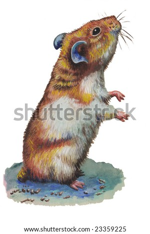 A Hamster illustration - stock photo