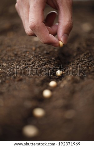 A hand gently placing seeds into a furrow in the soil. - stock photo