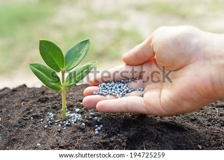 a hand giving fertilizer to a young plant / planting tree - stock photo