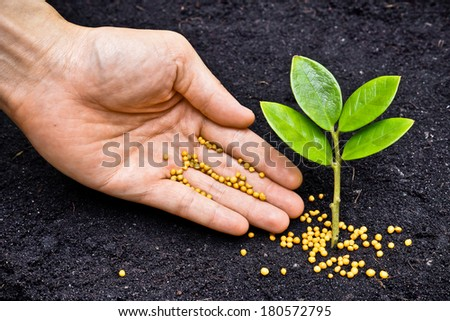 a hand giving fertilizer to a young plant / planting tree / fertilizing a young tree - stock photo