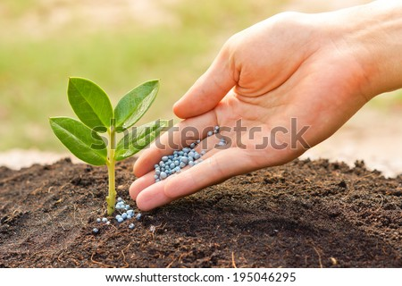 a hand giving fertilizer to a young plant with warm sunlight / planting tree - stock photo