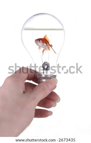 A hand holding a light bulb. A fish is swimming in the light bulb. White background. - stock photo