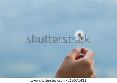 A hand holding dandelion